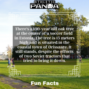Fun Facts oak tree in the middle of soccer pitch